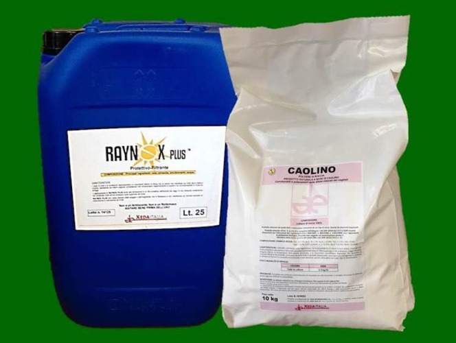 raynox-caolino-fonte-xeda