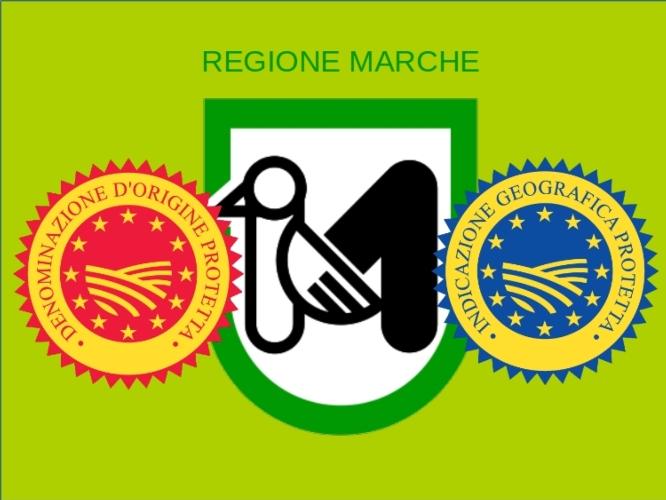 regione-marche-logo-igp-logo-dop-logo-by-matteo-giusti-agronotizie