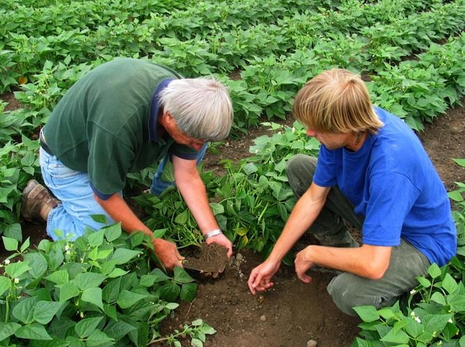 rete-assistenza-tecnica-agricoltura-iStock-176193-mod
