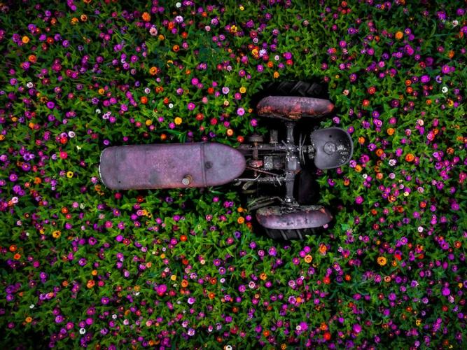 Revisione, che sian mesi o settimane, se sono rose fioriranno