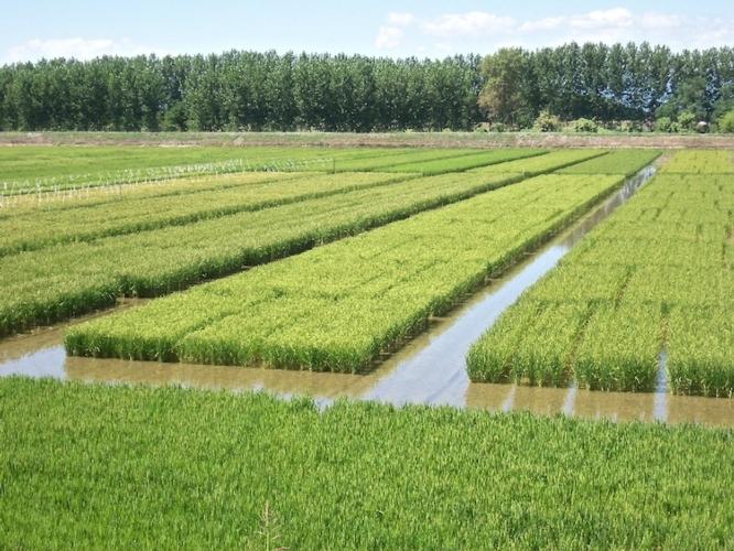 riso-fonte-assosementi-aprile-2017