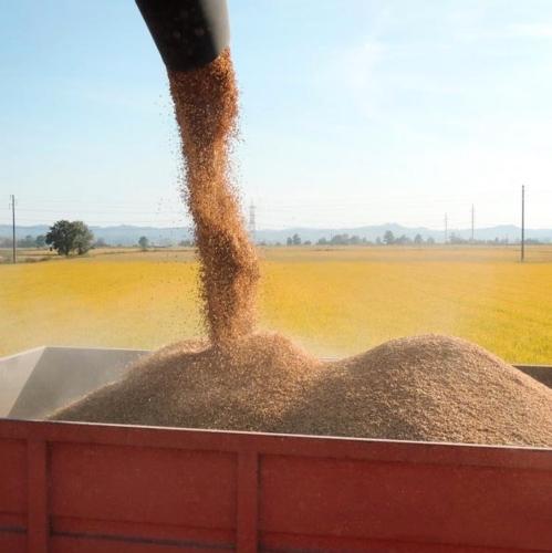 riso-reperso-fonte-sito-azienda-agricola-lodigiana-unica-produttrice-mag16