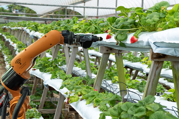robot-agricoltura-precisione-vertical-farming-by-zapp2photo-fotolia-750