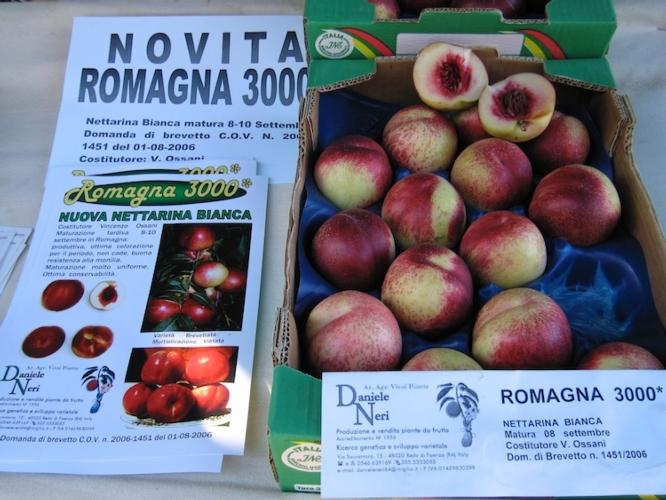 romagna3000