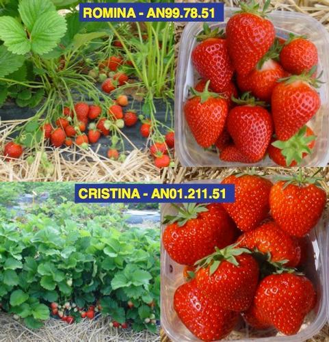 romina-cristina-euberry