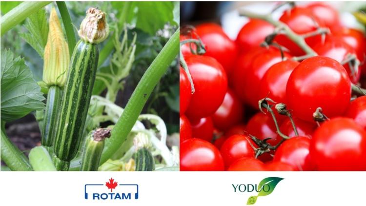 Boro, zinco e 17 amminoacidi per fioriture migliori - le news di Fertilgest sui fertilizzanti