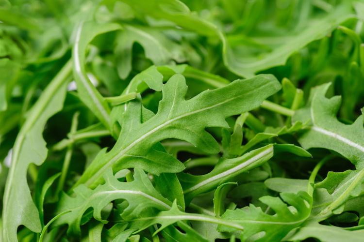 rucola-pianta-ivgamma-bystarush-adobestock-750x500