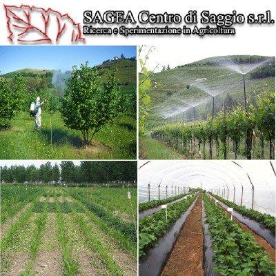 sagea-centro-di-saggio-logo-foto