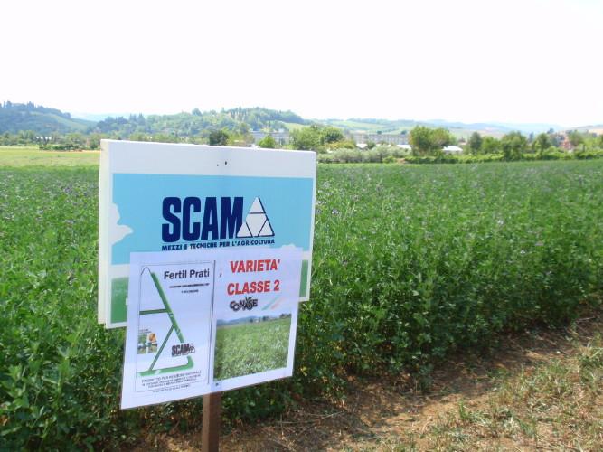 scam-concimazione-medica-fertil-prati-luglio-2009