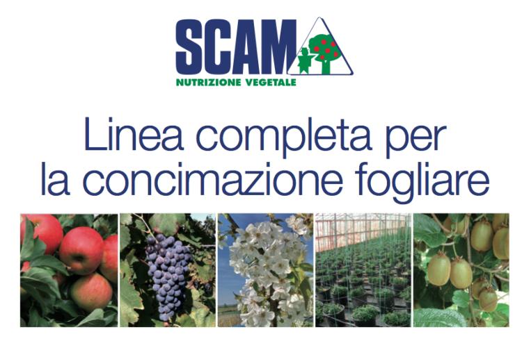 scam-linea-fogliari-fitostim-2019