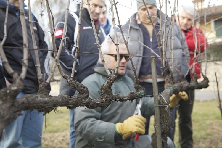 scuola-di-potatura-preparatori-uva.jpg