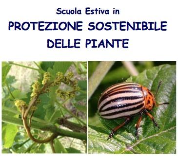 scuola-estiva-protezione-piante