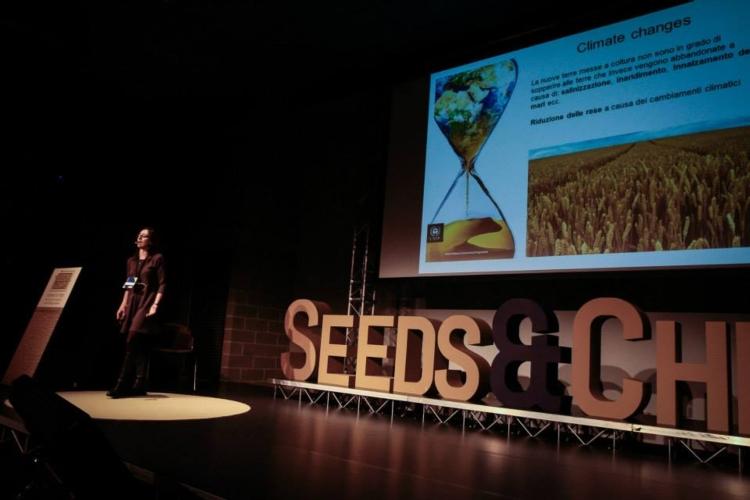 seedschips