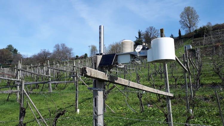 sensori-vigna-vino-erbaluce-fonte-consorzio-erbaluce