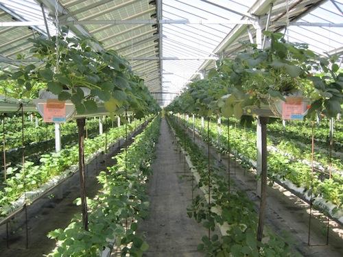 Cmm e agritechnology le potenzialit delle serre - Serra bioclimatica normativa ...