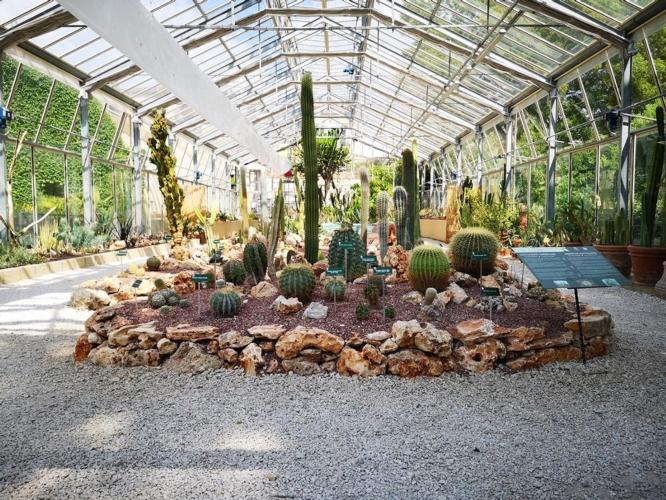 serra-succulente-orto-botanico-pisa-by-unipi-jpg.jpg