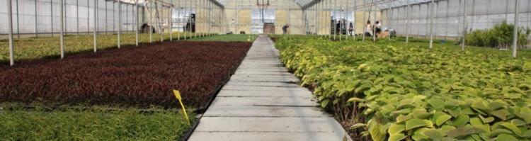 serra-vivaismo-vitroplant-fonte-vitroplant