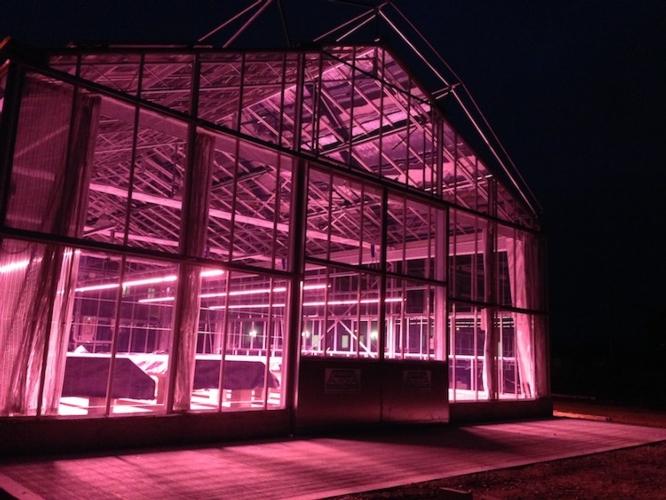 Serre smart: prima dimostrazione in campo - Plantgest news sulle varietà di piante
