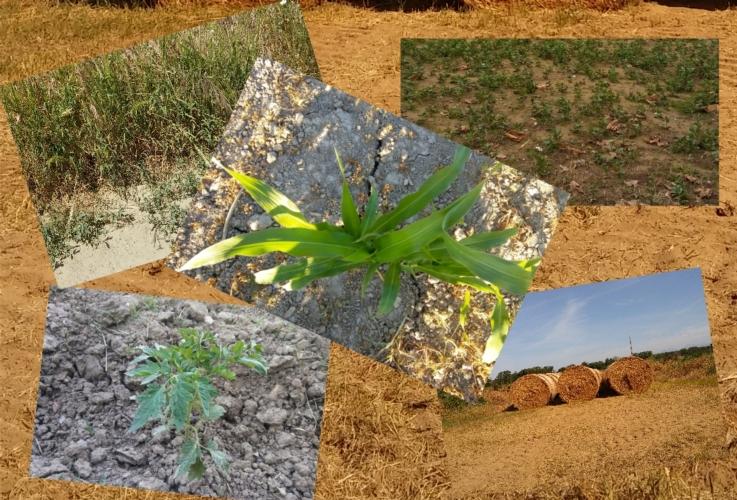 siccita-colture-carenza-idrica-by-matteo-giusti-agronotizie-jpg.jpg