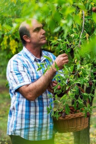 silvano-buccolini-pianta-di-giuggiolo-nov-2019-rubrica-agroinnovatori-fonte-azienda-agricola-sigi