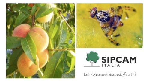 sipcam-mosca-frutta-2013.jpg