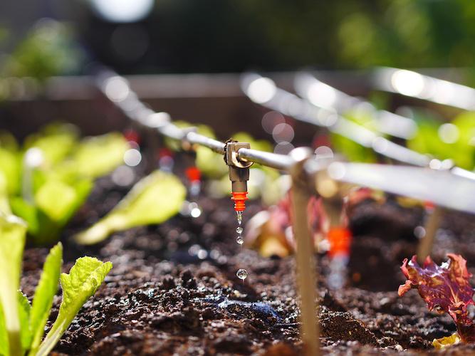 sistema-irrigazione-fertirrigazione-by-floki-adobe-stock-667x500.jpeg
