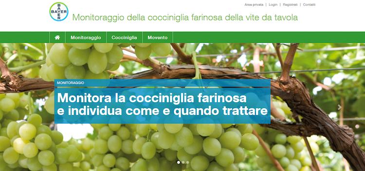 sito-cocciniglia-fonte-bayer