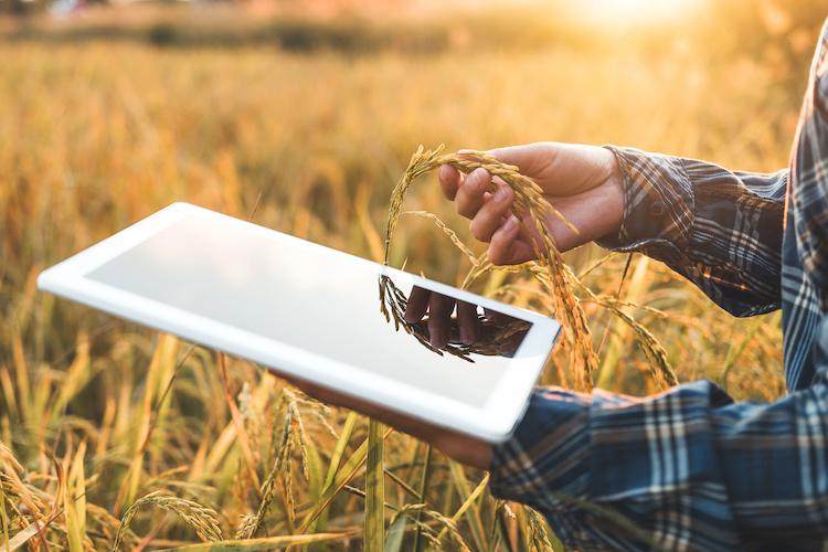 smart-farming-agricoltura-digitale-riso-by-joyfotoliakid-adobe-stock-750x500