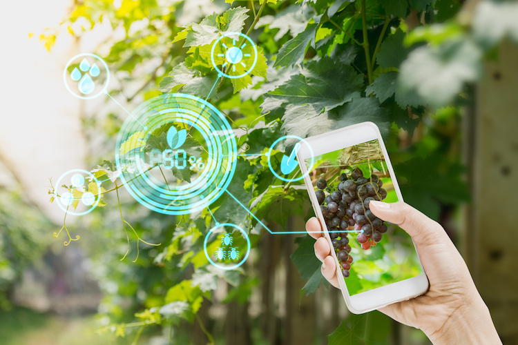 smartphone-tecnologie-app-internet-by-lamyai-adobe-stock-750x500.jpeg