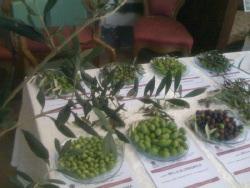 soi-olivo-olio-napoli-olive-covip-250