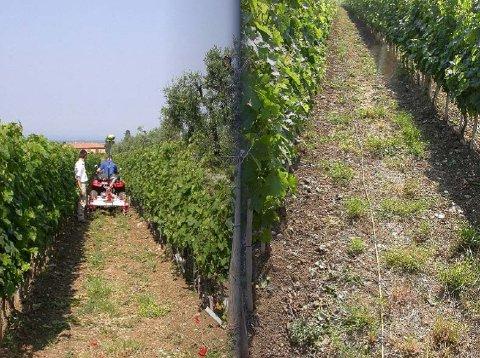 soing-arp-viticoltura-2-foto.jpg