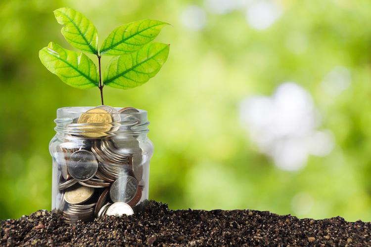 soldi-investimenti-agricoltura-pianta-by-kanachaifoto-fotolia-750
