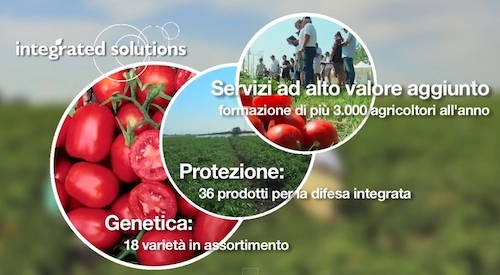 soluzioni-integrate-syngenta-pomodoro-industria