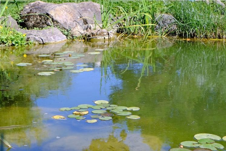 stagno-lago-laghetto-by-si-marina-fotolia-750.jpeg