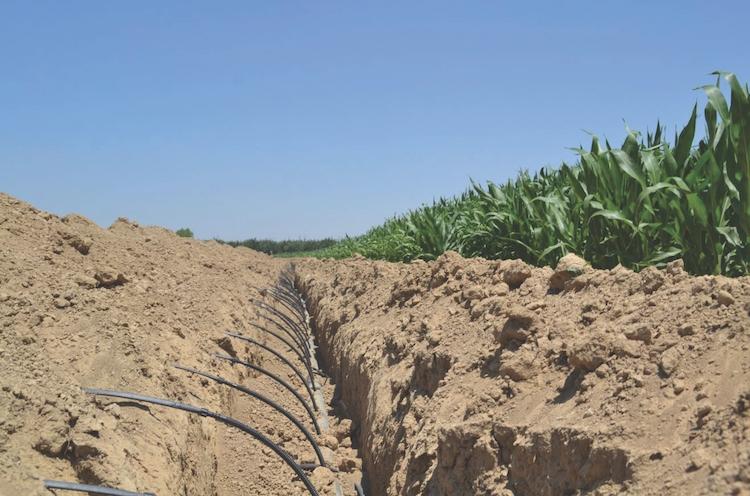 subirrigazione-netafim-su-mais-fonte-netafim