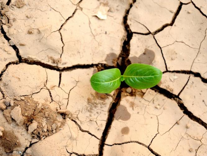 suolo-terreno-foglia-terzo-art-dic-2019-rosato-fonte-pagina-twitter-direzione-generale-per-ambiente-ce