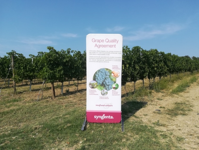 syngenta-grape-field-tour-oltrepo-pavese-2019