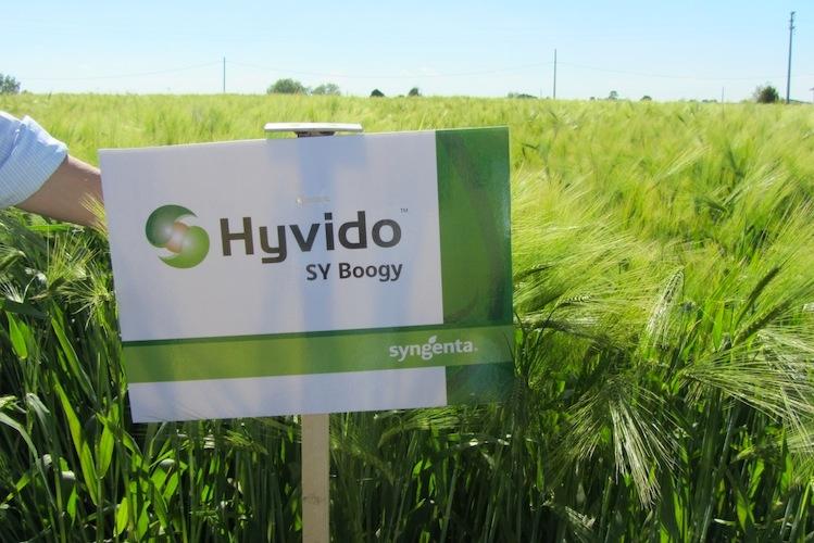 syngenta-in-campo-cereal-plus-20130513-rovigo-orzi-ibridi-hyvido-sy-boogie-byilcs
