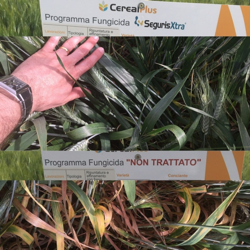syngenta-in-campo-seguris-xtra-prove-in-campo-2015-byagncs.jpg