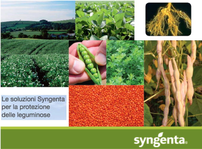 syngenta-leguminose