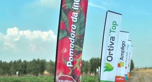 syngenta-orticoltura-foggia-luglio-2015-pomodoro-et-al