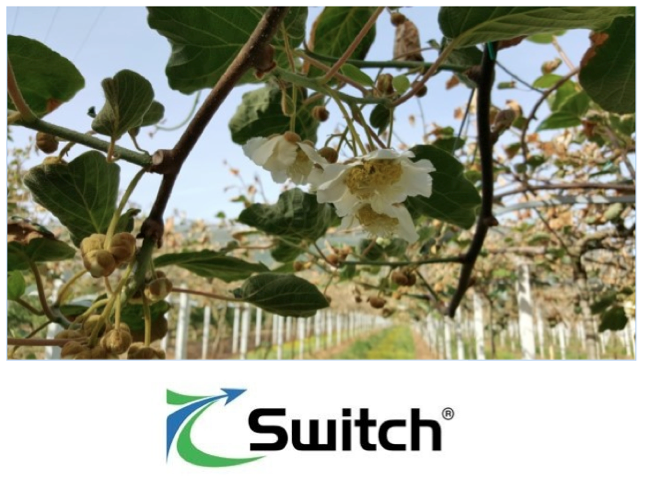 syngenta-switch-actinidia-2019