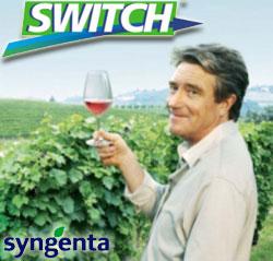 syngenta-switch-vite-vino-botrite-marciumi.jpg