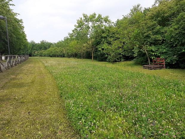 tagli-prato-differenziati-per-garantire-fioriture-agli-impolllinatori-montecchiomaggiore-vi-fonte-pubblici-giardini-20201104