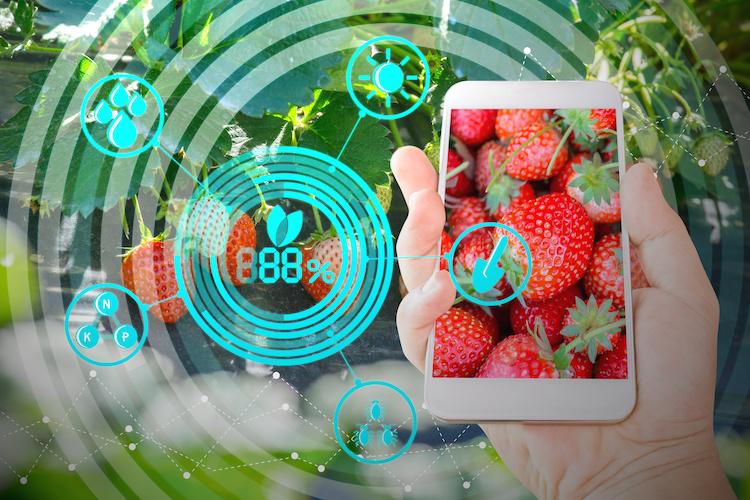 tecnologia-internet-app-mobile-cellulare-agricoltura-di-precisione-agricoltura-digitale-by-lamyai-adobe-stock-750x500