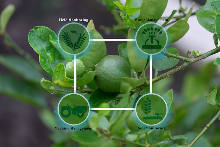 Agricoltura digitale, ecco le soluzioni offerte da otto big