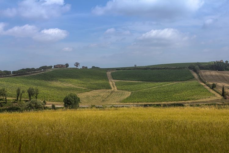 Enovitis in campo: tecnologia al servizio della viticoltura