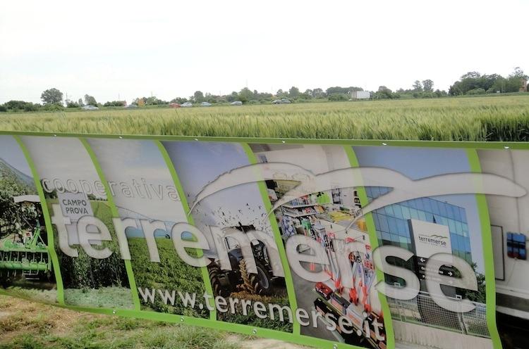 terremerse-banner-2013