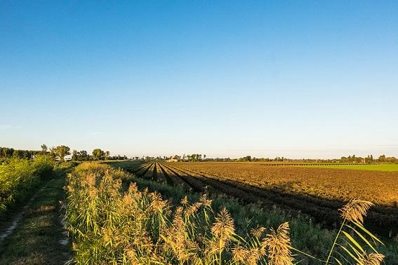 terreni-emilia-zonazione-fonte-cantina-carpi-cantina-sorbara.jpg