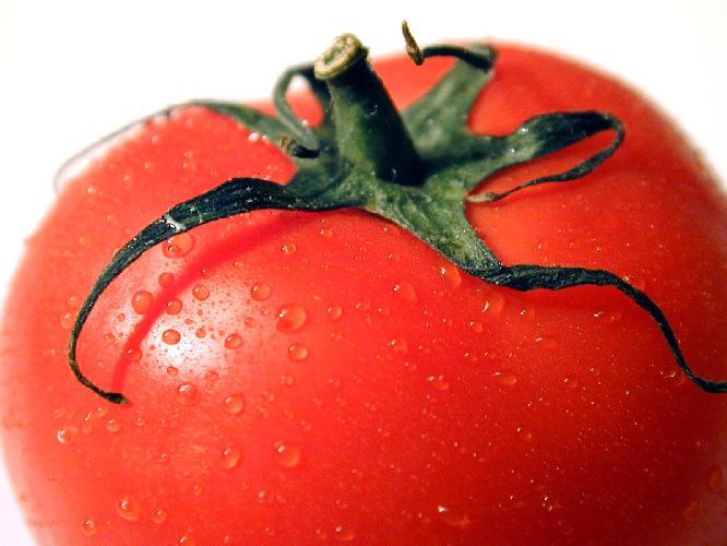 tomato-pomodoro-foto-dreamstime